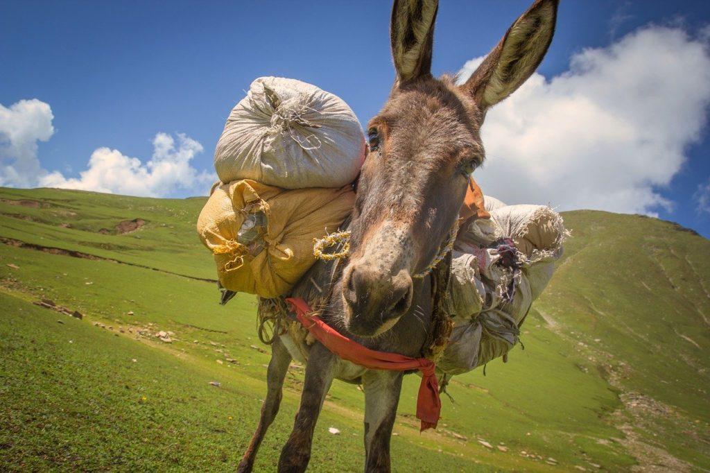 Bild eines vollgepackten Esels